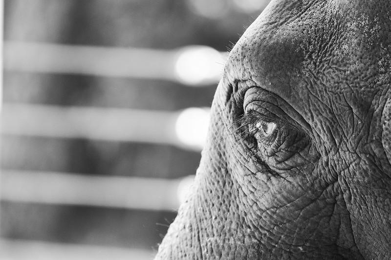 20181030 - Houston Zoo-DSC_0855.jpg