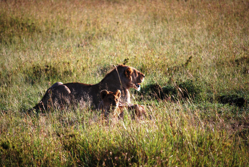 Serengeti (113).JPG