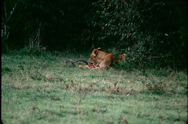 Kenya2_054.jpg