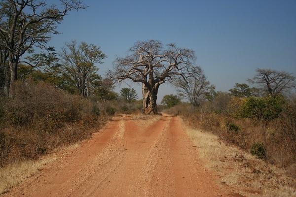 Zimbabwe%20Chitake%20Springs%20Baobab%20past%20turnoff%202ZIMBABWEZimbabwe%20Chitake%20Springs%20Baobab%20past%20turnoff%202.jpg
