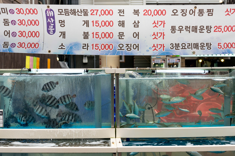 Fish in aquarium, Seoul, South Korea