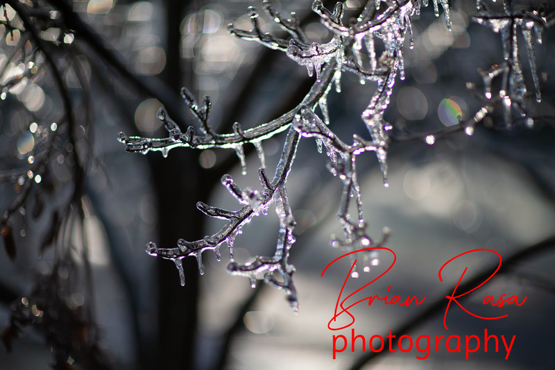 Seasons-Winter