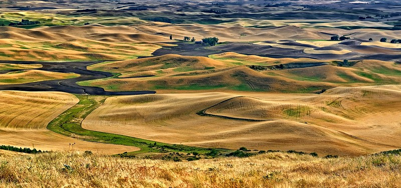 Palouse Harvest Gold