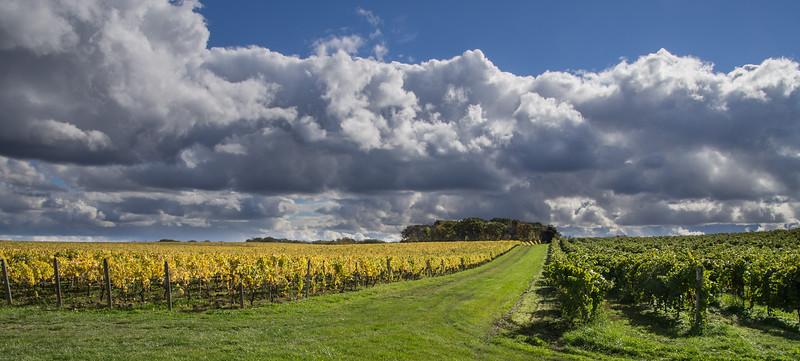 Fall scene in the Niagara wine district