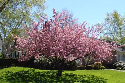 2007-5-7 Camper - Spring