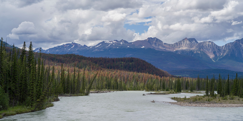 River flowing through forest with mountains in the background, Athabasca River, Icefields Parkway, Jasper, Alberta, Canada