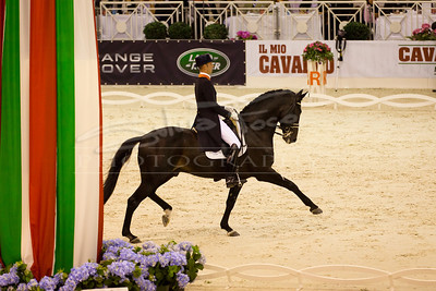 Horse Competition & Events