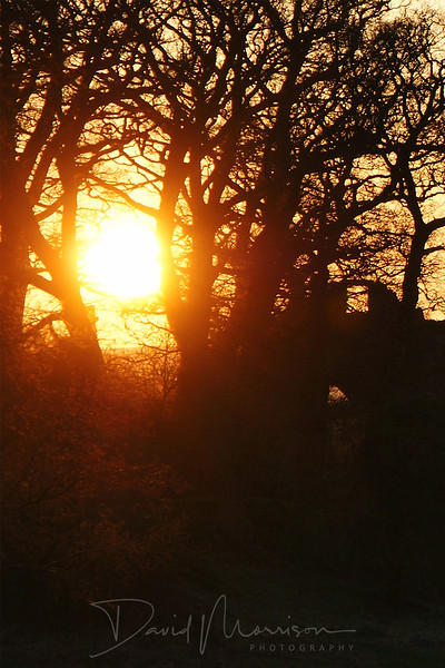 021-Lincluden-Abbey-Eve.jpg