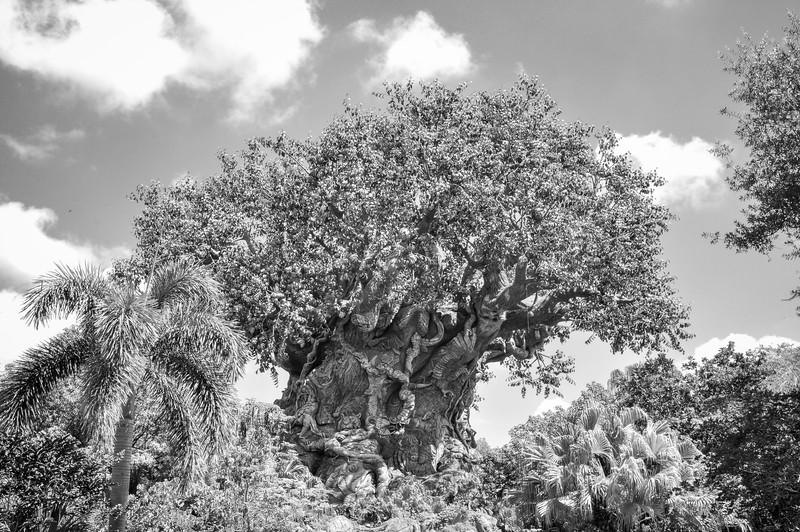 DSC_0093- Animal Kingdom Tree of Life BW.jpg