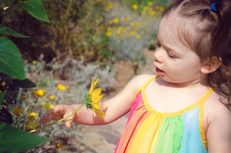 elora sunflower.jpg