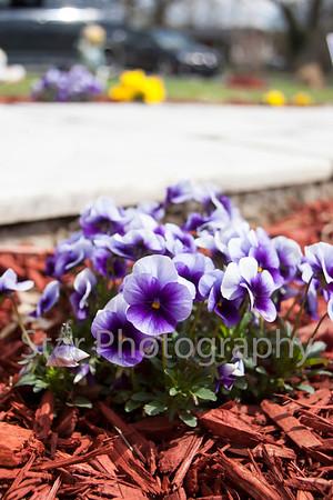 Spring Flowers 04-09-14