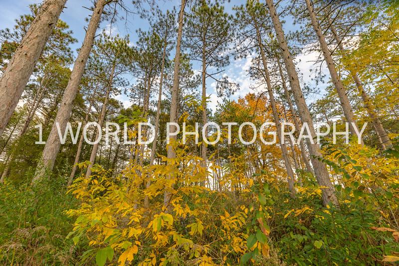 Morton Arboretum Fall 2017-135-2-3.jpg