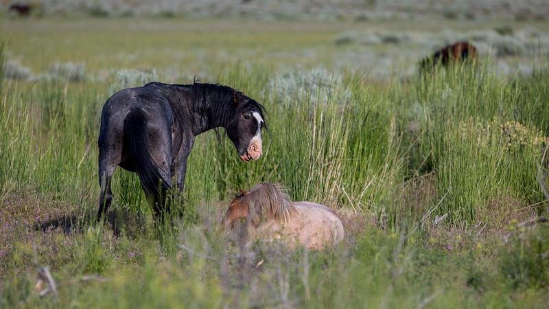 Wild Mustangs 2019-40.jpg