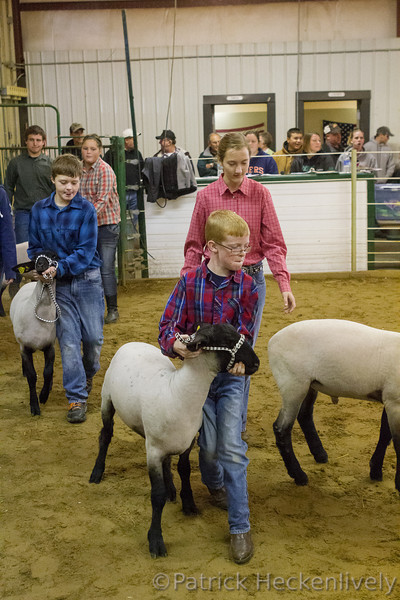 2012-09-24 Sheep Showmanship Judging