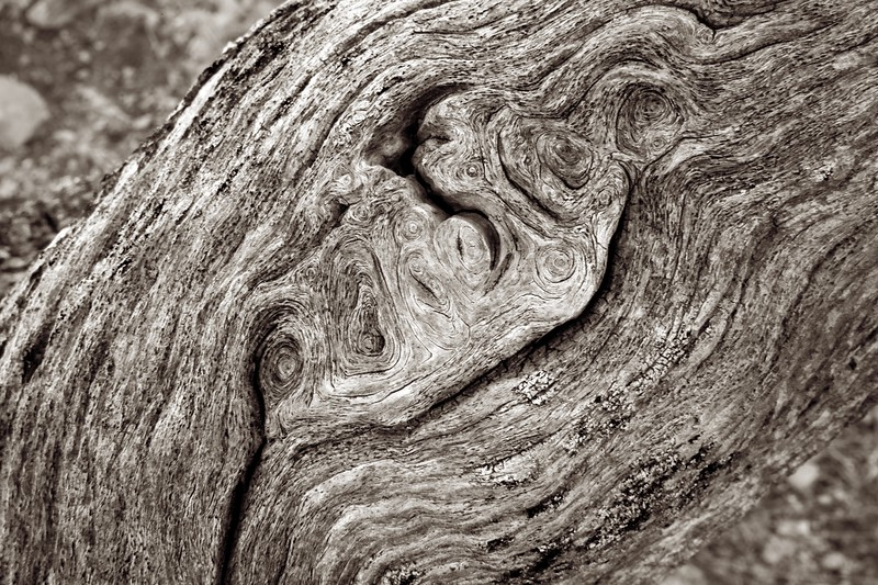 C Photo Lenswork 2006-11-25 Wood Study 2089.jpg