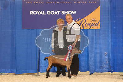RAWF Dairy Goat Show Oberhasli Champions and Candids 2017