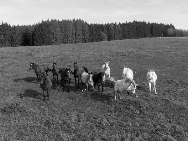 Koně bez lidí