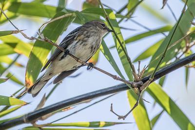 Naples Botanical Garden Birds