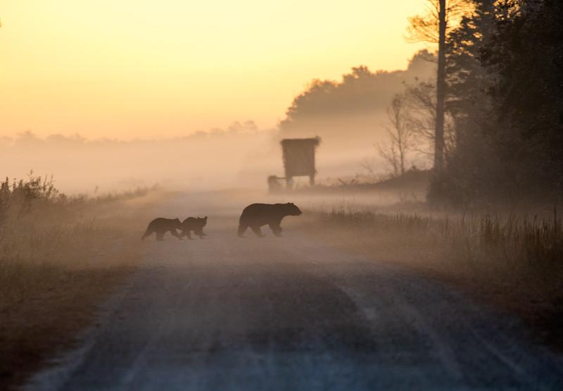 Bears in Early morning fog.jpg