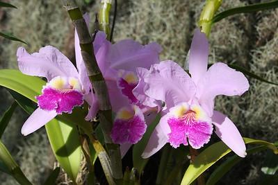 Soroa Orchid Garden