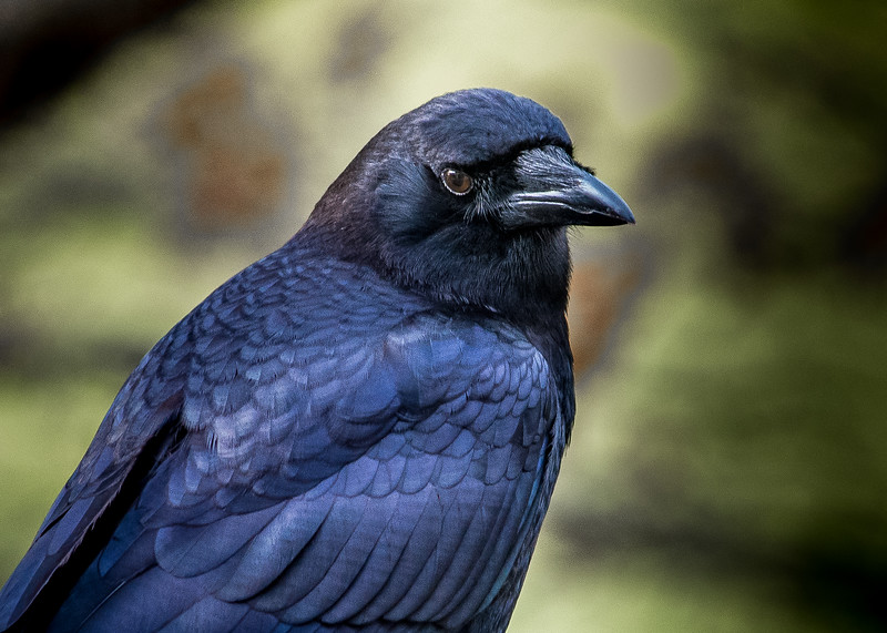 crow character (1 of 1).jpg