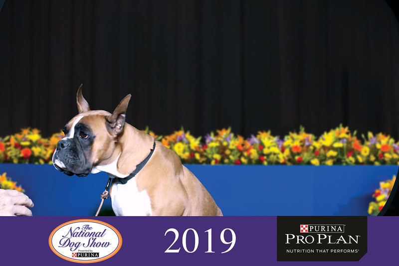 National Dog Show 2019