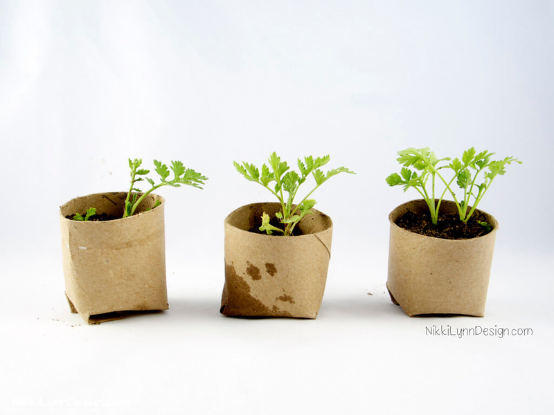 Plant Seedlings in Tubes - The container can be planted directly into the ground outdoors.