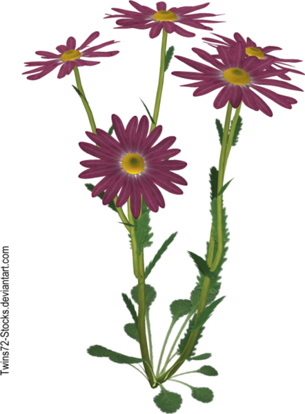 flower_8_by_twins72_stocks-d4jkhrj.png