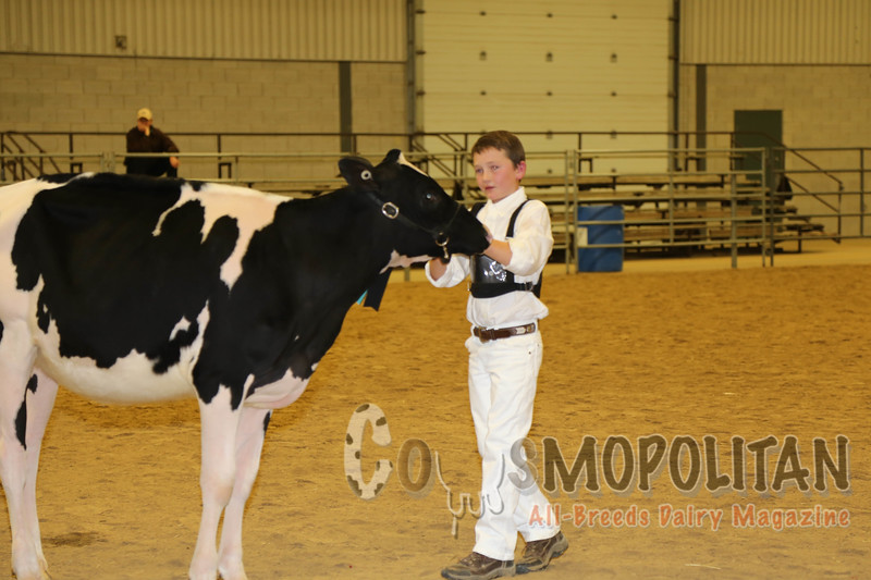 Autumn Opportunity Holstein 15
