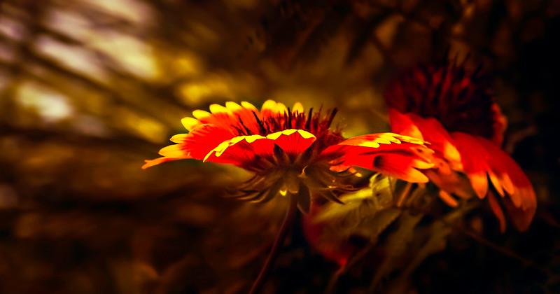 The Magic of Light-294.jpg