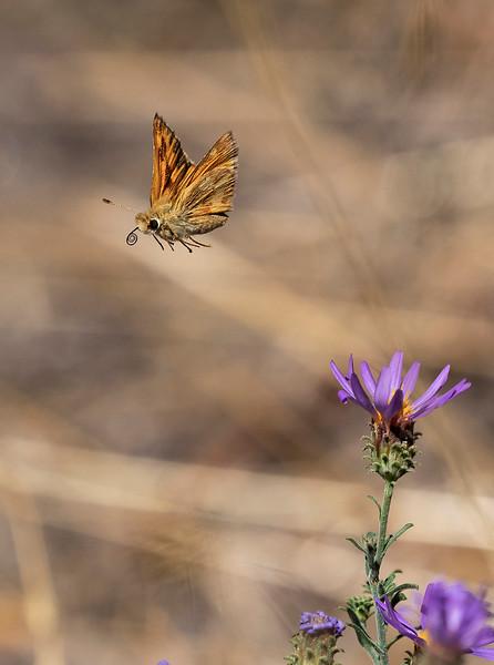 butterfly.crop.jpg