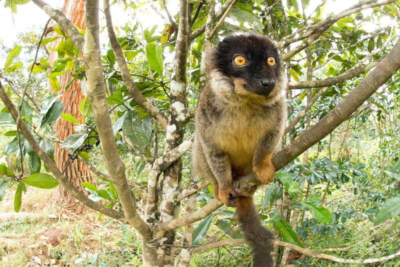 Madagascar_2013_FH0T8800.jpg