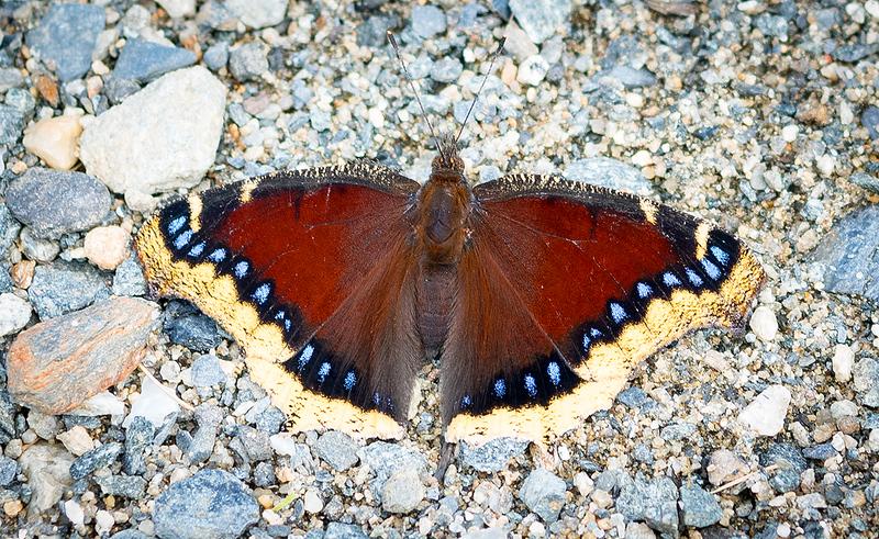 Butterfly 29.jpg