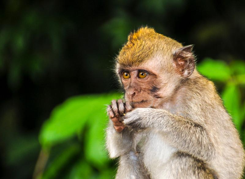 Bali Monkeys-5.jpg