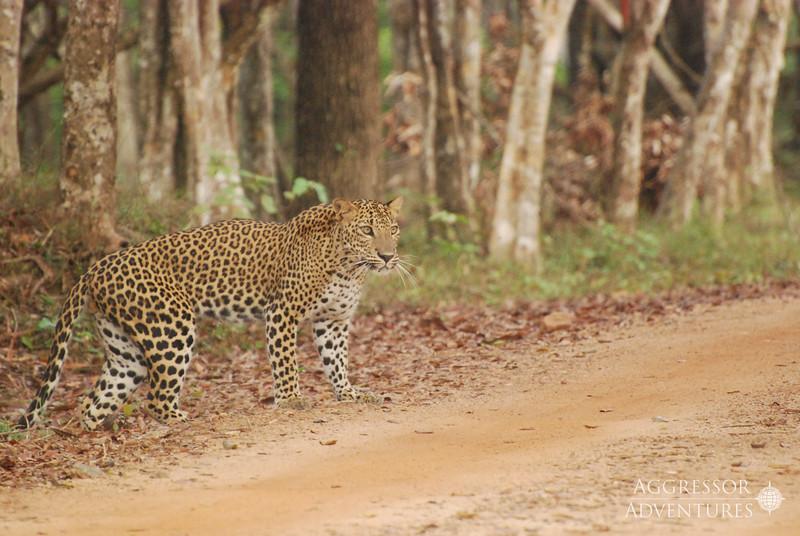 srilanka-animals-wm1.jpg