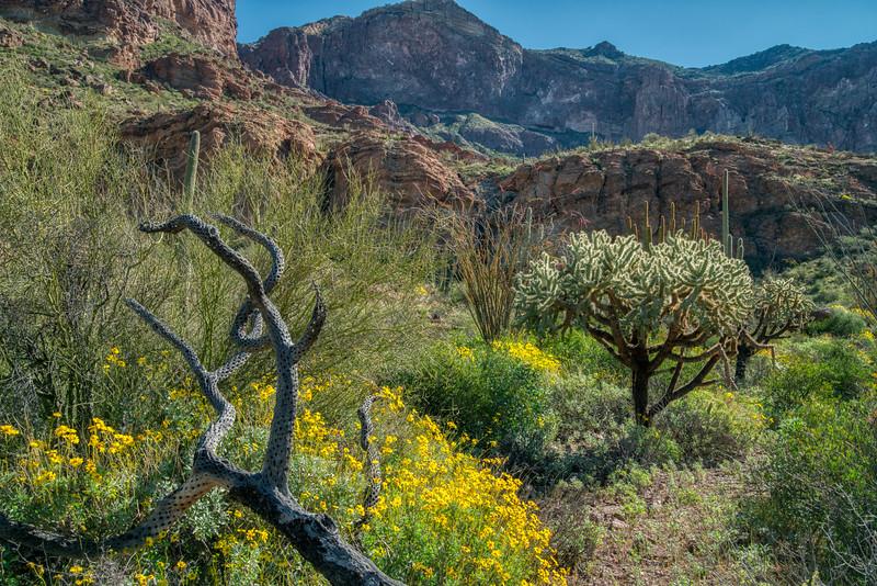 Organ Pipe Cactus 2020-27.jpg