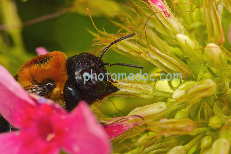 Bee's flying around  Flowers and wasp