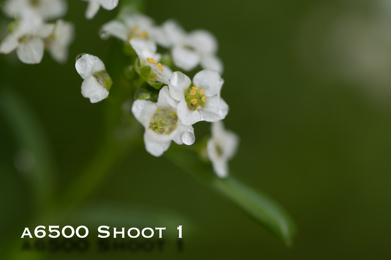 a6500 macro - Shoot 1-19.jpg