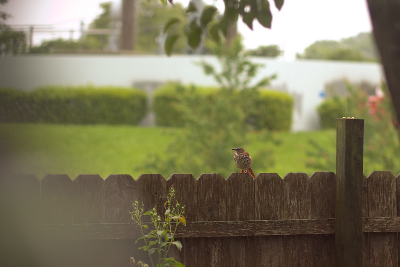 05/30/2012 - Hungry Bird