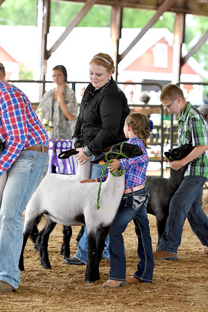 Youth & Open Sheep Show 8-15-2016