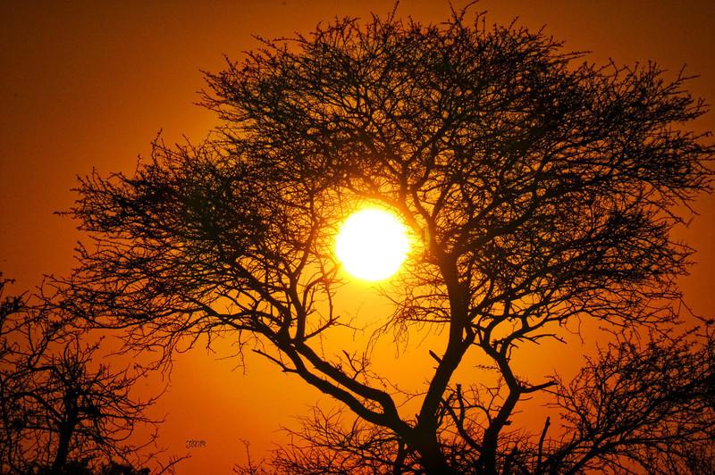 Sun tree.jpg