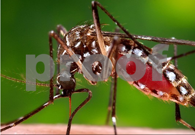 zika-virus-case-reported-in-rusk-county