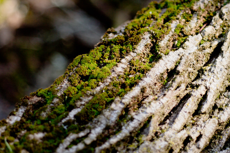 Moss on the Tree 19
