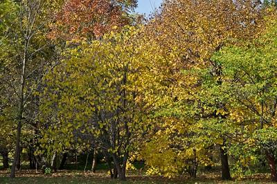 2019 Visit to Delware Park - Buffalo NY