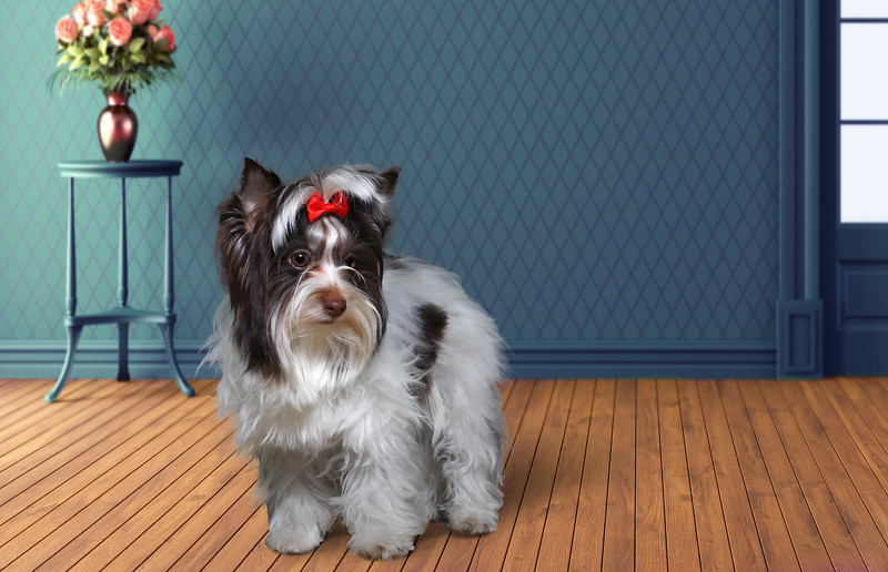 Rosie-1.jpg