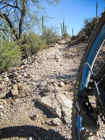 2020-11-15 Tucson Sweetwater Preserve