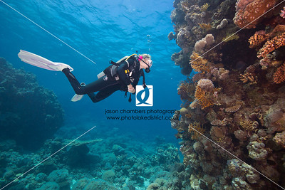 Red Sea Dive Photographs