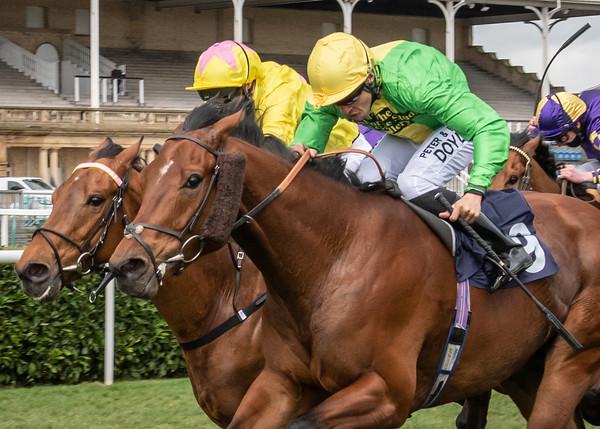 Race 1 - Tahitian Prince