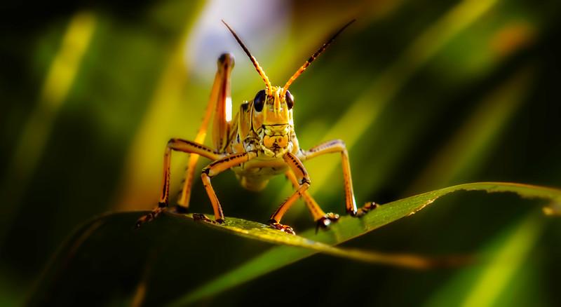 Grasshoppers 40.jpg