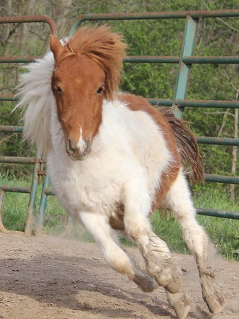 REF horses 2